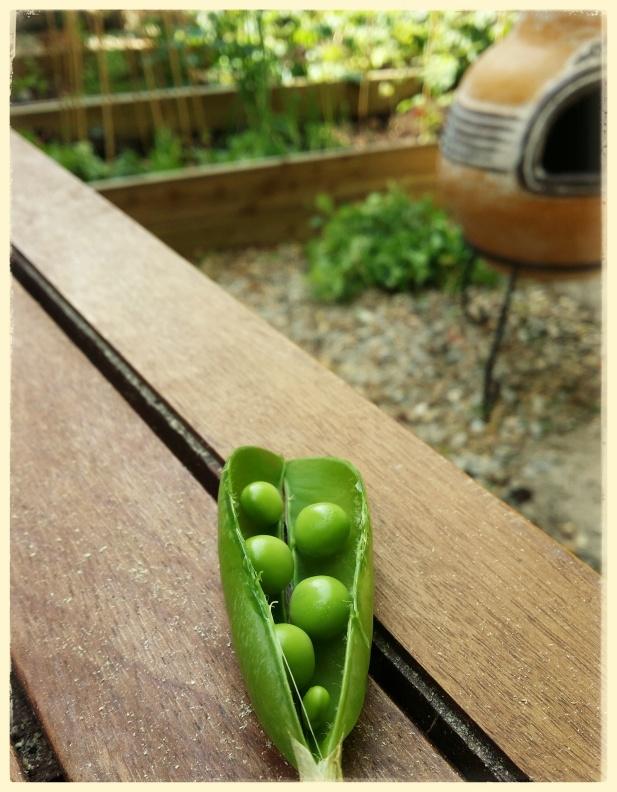 peas in a pod image