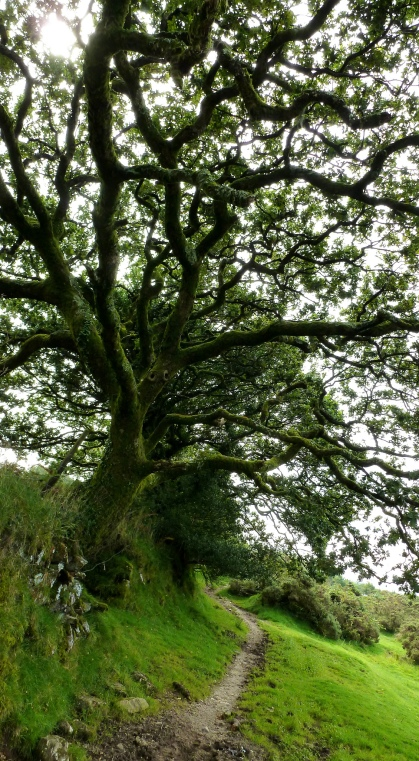 Image of Dartmoor tree